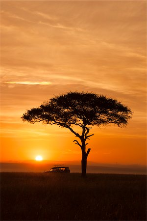 View of acacia tree and safari jeep silhouetted against beautiful sunrise sky, Maasai Mara National Reserve, Kenya, Africa. Stock Photo - Rights-Managed, Code: 700-06645853