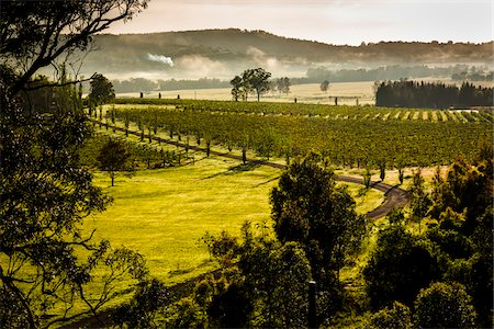 Overview of a vineyard in wine country near Pokolbin, Hunter Valley, New South Wales, Australia Stock Photo - Rights-Managed, Code: 700-06675106