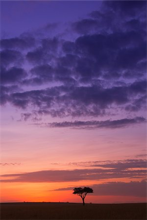 Colorful cloudy sky just before sunrise, Maasai Mara National Reserve, Kenya, Africa. Stock Photo - Rights-Managed, Code: 700-06671744