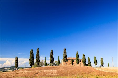 Cypress trees (Cupressus sempervirens) in front of Tuscan villa in summer, Val d'Orcia, Tuscany, Italy Stock Photo - Rights-Managed, Code: 700-06701743