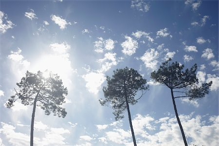 sun - Low Angle View of Three Trees Backlit by Bright Sun Against Blue Sky Stock Photo - Rights-Managed, Code: 700-06714064