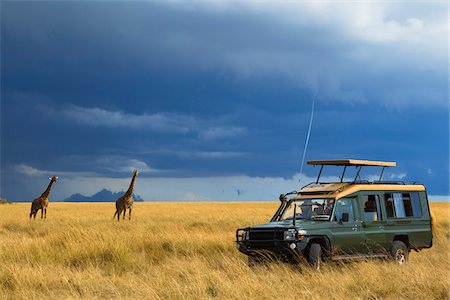 Masai giraffe (Giraffa camelopardalis tippelskirchi) and safari jeep in the Maasai Mara National Reserve, Kenya, Africa. Stock Photo - Rights-Managed, Code: 700-06732533