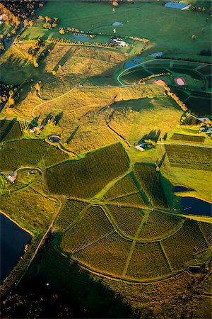 Aerial view of vineyards near Pokolbin, Hunter Valley, New South Wales, Australia Stock Photo - Rights-Managed, Code: 700-06732745