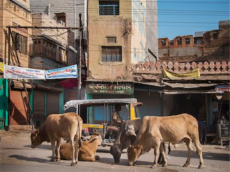 Sacred cows and rickshaw in main street of Bikaner, Bikaner district, Rajasthan, India Stock Photo - Rights-Managed, Code: 700-06786717