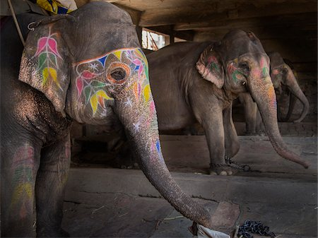 designs - Decorated elephants in stable, Amber, India Stock Photo - Rights-Managed, Code: 700-06782139