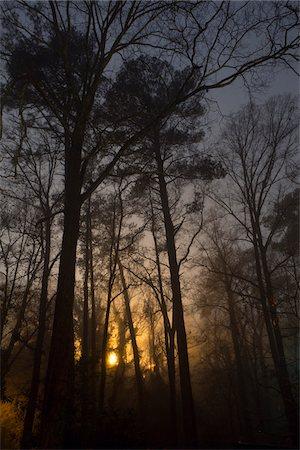 Glowing foggy trees at night, Macon, Georgia, USA Stock Photo - Rights-Managed, Code: 700-06809002