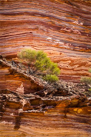 picture - Shrub on Rock Ledge, The Loop, Kalbarri National Park, Western Australia, Australia Stock Photo - Rights-Managed, Code: 700-06841558
