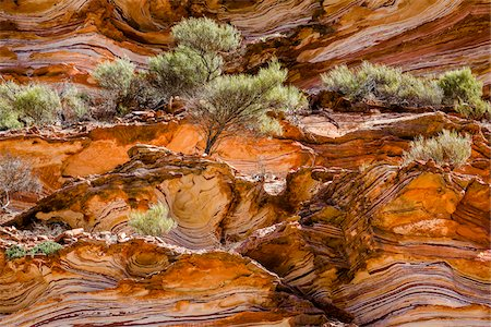 pattern - Trees on Striped Cliffside, The Loop, Kalbarri National Park, Western Australia, Australia Stock Photo - Rights-Managed, Code: 700-06841551