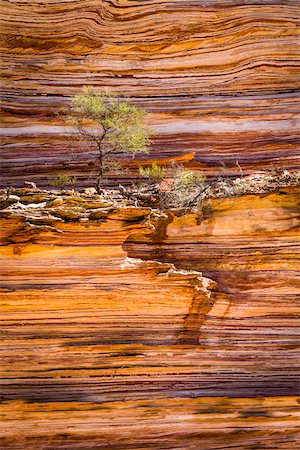 Detail of Tree and Rock Wall, The Loop, Kalbarri National Park, Western Australia, Australia Stock Photo - Rights-Managed, Code: 700-06841552