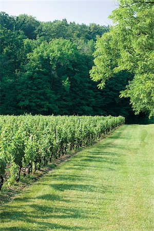 Edge of vineyard on Niagara Escarpment , Niagara Region, Ontario, Canada Stock Photo - Rights-Managed, Code: 700-06895095