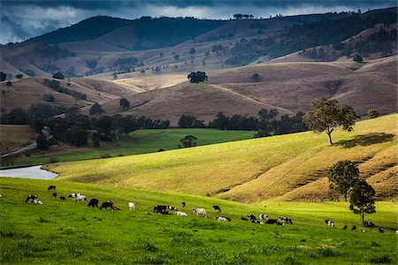 Dairy farms along the Bingledurra Road near East Gresford, New South Wales, Australia. Stock Photo - Rights-Managed, Code: 700-06899978