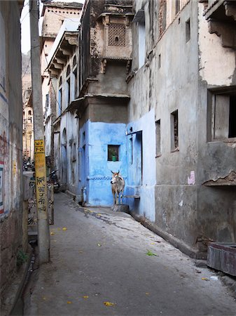 street view with sacred cow in old quarter of Binda, India Stock Photo - Rights-Managed, Code: 700-06892561