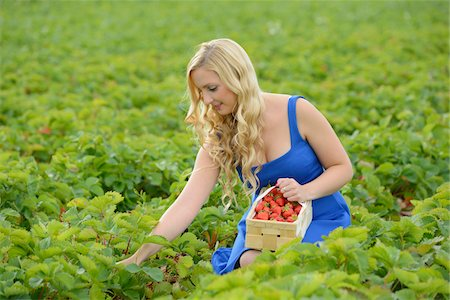 selecting - Young woman in a strawberryfield with a basket full of strawberries, Bavaria, Germany Stock Photo - Rights-Managed, Code: 700-06936100