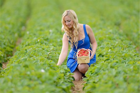 Young woman in a strawberryfield with a basket full of strawberries, Bavaria, Germany Stock Photo - Rights-Managed, Code: 700-06936123
