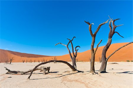 dry - Dead Vlei, Namib-Naukluft National Park, Namib Desert, Sossusvlei Region, Namibia, Africa Stock Photo - Rights-Managed, Code: 700-06962207