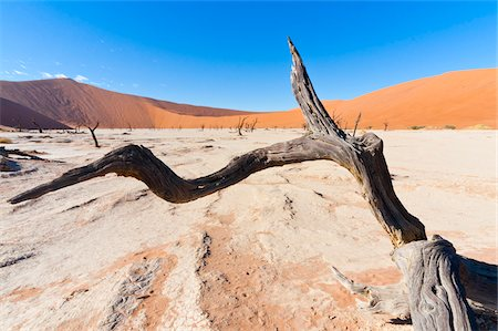 Dead Vlei, Namib-Naukluft National Park, Namib Desert, Sossusvlei Region, Namibia, Africa Stock Photo - Rights-Managed, Code: 700-06962235