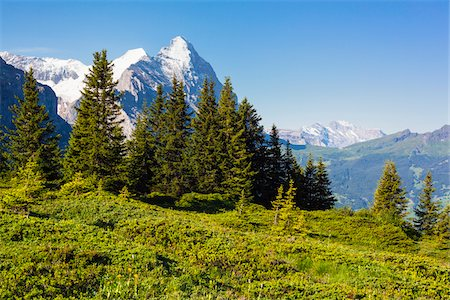 Alpine Meadow and Evergreen Trees with Eiger Peak in the distance, Bernese Alps, Grosse Scheidegg, Canton of Bern, Switzerland Stock Photo - Rights-Managed, Code: 700-07026614