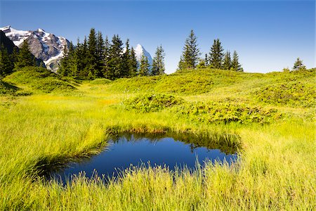 Little Pond on Alpine Meadow with Eiger Peak in the distance, Bernese Alps, Grosse Scheidegg, Canton of Bern, Switzerland Stock Photo - Rights-Managed, Code: 700-07026613