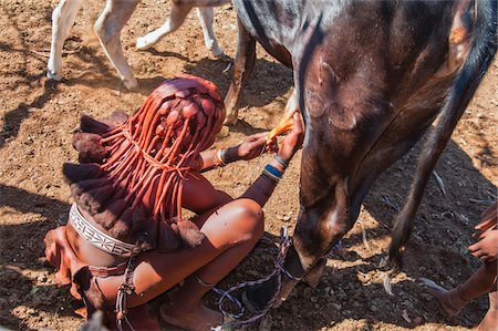 Himba woman milking a cow, Kaokoveld, Namibia, Africa , Namibia, Africa Stock Photo - Rights-Managed, Code: 700-07067377