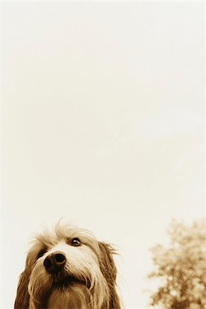 Portrait of Dog Outdoors Stock Photo - Rights-Managed, Code: 700-07199548
