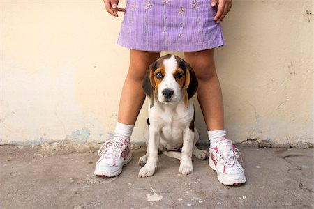 domestic - Girl with Beagle Stock Photo - Rights-Managed, Code: 700-07199642