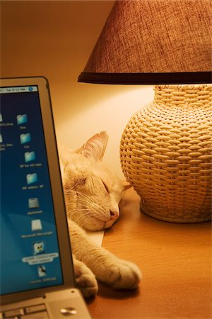 sweet   no people - Cat Asleep on Desk Behind Laptop Computer Stock Photo - Rights-Managed, Code: 700-07199659