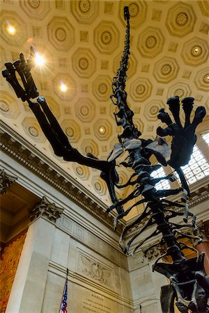 prehistoric - Dinosaur's skeleton, American Museum of Natural History, Upper West Side, Manhattan, New York City, New York, USA Stock Photo - Rights-Managed, Code: 700-07310871