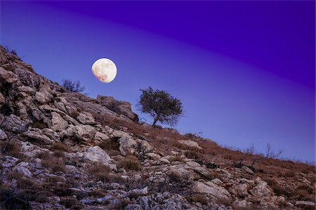 rugged landscape - Scenic view of tree on rocky hillside with moon in night sky, Matala, Crete, Greece. Stock Photo - Rights-Managed, Code: 700-07608378