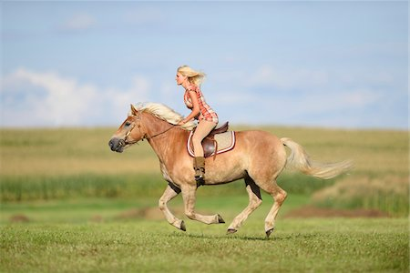 Young woman riding a haflinger horse in a field in summer, Upper Palatinate, Bavaria, Germany Stock Photo - Rights-Managed, Code: 700-07734370