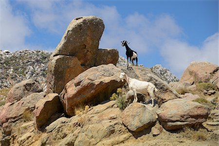 rugged landscape - Goats on rocks in mountains, Naxos, Cyclades Islands, Greece Stock Photo - Rights-Managed, Code: 700-07783728