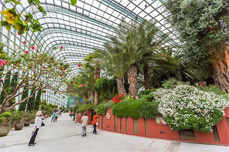 Flower Dome, Gardens by the Bay, Singapore Stock Photo - Rights-Managed, Code: 700-07802659