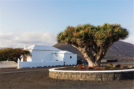 Canary Islands Dragon Tree by White Washed Ermita de Nuestra Senora de la Caridad nearby Vineyards, La Geria, Lanzarote, Canary Islands, Spain Stock Photo - Rights-Managed, Code: 700-07958189