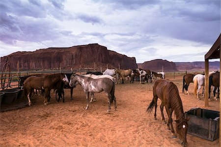 Horses on ranch with dark, cloudy sky, Monument Valley, Arizona, USA Stock Photo - Rights-Managed, Code: 700-08002508