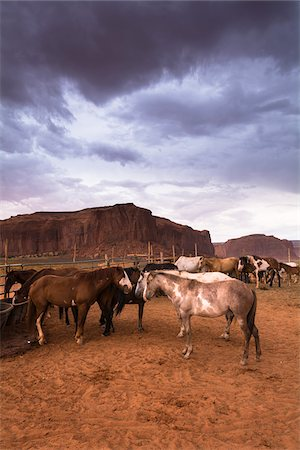 Horses on ranch with dark cloudy sky, Monument Valley, Arizona, USA Stock Photo - Rights-Managed, Code: 700-08002509