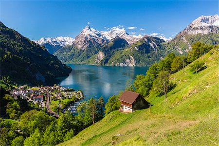 Alpine Meadow above Village of Sisikon at Tellsplatte at Urnersee in front of Mount Gitschen and Urirotstock still Snow Covered, Canton of Uri, Switzerland Stock Photo - Rights-Managed, Code: 700-08059789