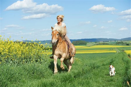Young woman riding a Haflinger horse with Kooikerhondje dog running beside, spring, Bavaria, Germany Stock Photo - Rights-Managed, Code: 700-08080597