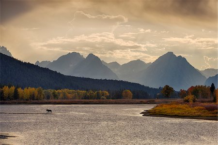 Moose in Oxbow Bend of Snake River with Mt Moran in Autumn, Jackson, Grand Teton National Park, Wyoming, USA Stock Photo - Rights-Managed, Code: 700-08082987