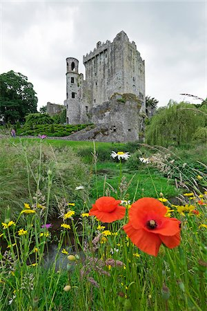 Red poppy in field with Blarney Castle, County Cork, Republic of Ireland Stock Photo - Rights-Managed, Code: 700-08102775