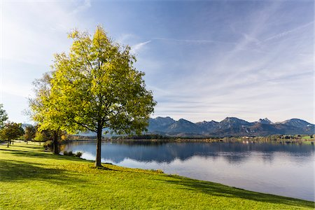 fall trees lake - Tree by Lakeshore in Autumn, Lake Hopfensee, Swabia, Bavaria, Germany Stock Photo - Rights-Managed, Code: 700-08103037
