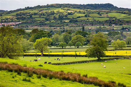 Farmland and countryside, Stanway, Gloucestershire, The Cotswolds, England, United Kingdom Stock Photo - Rights-Managed, Code: 700-08122144