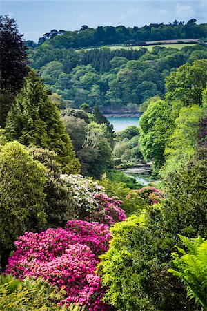 Trebah Gardens, Cornwall, England, United Kingdom Stock Photo - Rights-Managed, Code: 700-08122250