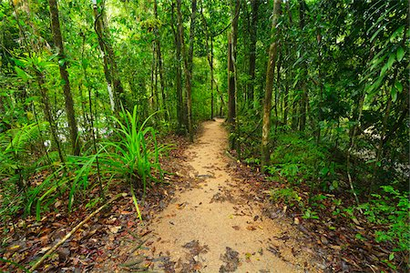 queensland - Path in Daintree Rainforest, Mossman Gorge, Daintree National Park, Queensland, Australia Stock Photo - Rights-Managed, Code: 700-08146044