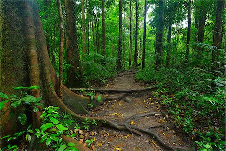 Path in Daintree Rainforest, Mossman Gorge, Daintree National Park, Queensland, Australia Stock Photo - Rights-Managed, Code: 700-08146046