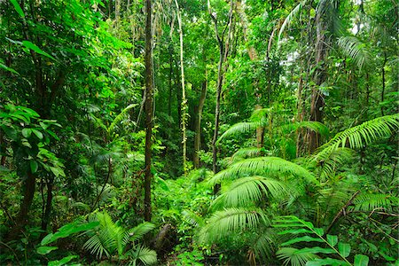 Daintree Rainforest, Mossman Gorge, Daintree National Park, Queensland, Australia Stock Photo - Rights-Managed, Code: 700-08146042