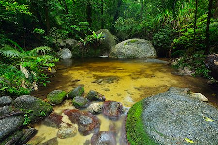 queensland - Creek, Daintree Rainforest, Mossman Gorge, Daintree National Park, Queensland, Australia Stock Photo - Rights-Managed, Code: 700-08146050