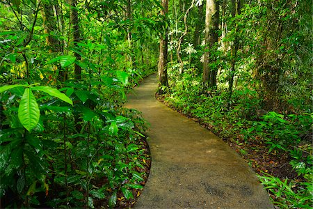 Boardwalk in Daintree Rainforest, Cape Tribulation, Daintree National Park, Queensland, Australia Stock Photo - Rights-Managed, Code: 700-08146051