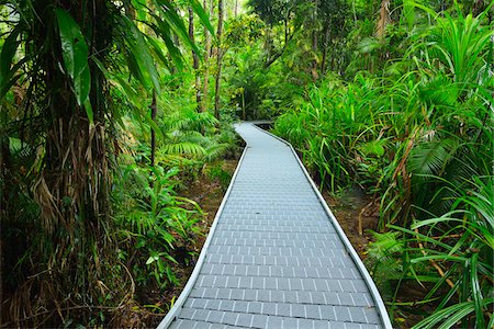 queensland - Boardwalk in Daintree Rainforest, Cape Tribulation, Daintree National Park, Queensland, Australia Stock Photo - Rights-Managed, Code: 700-08146052