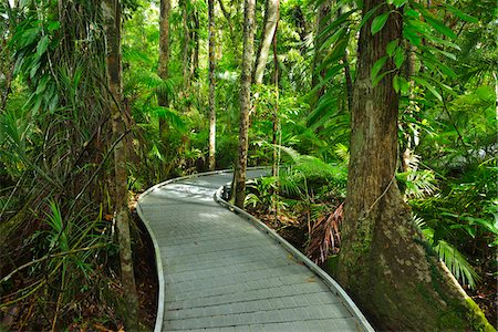 Boardwalk in Daintree Rainforest, Cape Tribulation, Daintree National Park, Queensland, Australia Stock Photo - Rights-Managed, Code: 700-08146053