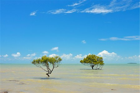 queensland - Mangrove Trees in Sea, Clairview, Queensland, Australia Stock Photo - Rights-Managed, Code: 700-08146221