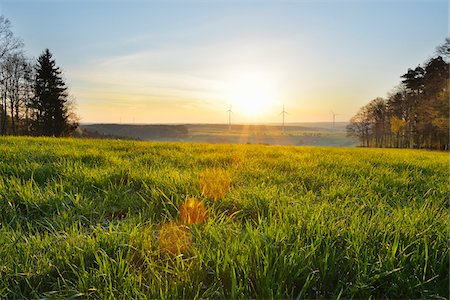 Meadow in Spring at Sunrise with Wind Turbines in background, Schippach, Miltenberg, Odenwald, Bavaria, Germany Stock Photo - Rights-Managed, Code: 700-08225283